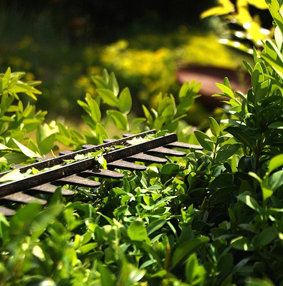Arbres et arbustes pour aménager votre jardin d\'extérieur à Mios